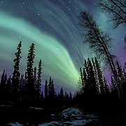 Northern Lighst over Fairbanks, Alaska.