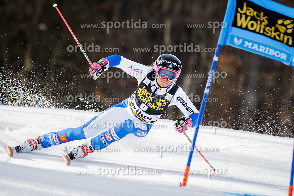 Frida Hansdotter (SWE) during 7th Ladies' Giant slalom at 52nd Golden Fox - Maribor of Audi FIS Ski World Cup 2015/16, on January 30, 2016 in Pohorje, Maribor, Slovenia. Photo by Ziga Zupan / Sportida