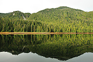 Conifer trees on the shore of Misty Fjords National monument are reflected in the glassy calm waters of Rudyerd bay, Alaska.