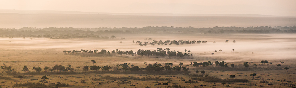 A foggy morning on the Masai Mara, Kenya