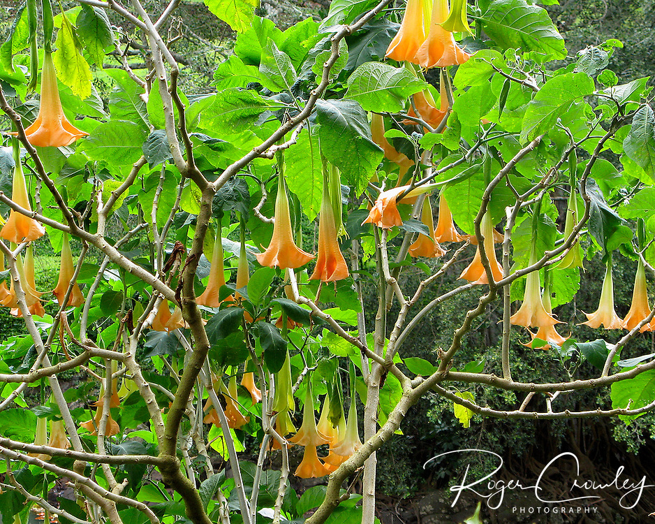 Tropical flowers are in bloom at 260 acre McBride Garden in the National Tropical Botanical Garden in Kaua'i, Hawaii. It is a living collection of more than 6,000 species of tropical plants.