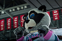 KELOWNA, CANADA - FEBRUARY 2:  Kelowna Rockets' mascot Rocky Raccoon stands on the ice against the Everett Silvertips on FEBRUARY 2, 2018 at Prospera Place in Kelowna, British Columbia, Canada.  (Photo by Marissa Baecker/Shoot the Breeze)  *** Local Caption ***