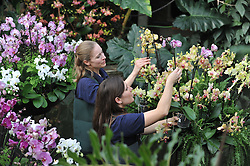 © Licensed to London News Pictures. 02/04/14 About 125 jobs could be cut as the Royal Botanic Gardens in Kew, west London, faces a £5m shortfall in revenue in the coming financial year. FILE PICTURE DATED  03.02.2011. Tsuyeko Western (bottom) and Anne Rostek (top) add the final orchids to a display in the tropical glasshouse at Kew Gardens today (Thur). The launch of Kew Garden's Tropical Extravaganza. This theme celebrates the fact that 2011 has been designated the Year of the Forest by the UN. It is attempting to celebrate the rainforests' beauty as well as highlight the dangers that they are facing. The display includes varieties of Orchids, Anthuriums, Tillandsias and Aechmeas. Picture Credit should read Stephen Simpson/LNP