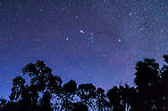 Orion setting in deep twilight sky with stars in abundance but the sky still deep blue, from Australia with Orion &ldquo;upside down.&rdquo; The Saucepan asterism popular in Australia is visible here, made of the Belt stars, and stars in the Sword and the star to the left of the bottom star in the Belt here.<br /> <br /> This is a stack of 4 x 20 second exposures for the trees to smooth noise and one 20-second exposure for the sky, all untracked with the 35mm lens at f/2 and Canon 6D at ISO 1600. Taken from Tibuc Gardens Cottage, Coonabarabran, Australia.
