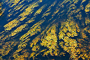 Wetland<br />Grass River Provincial Park<br />Manitoba<br />Canada