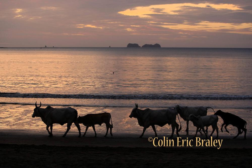 Bahia del Sol, Costa Rica. Colin Braley/Photo