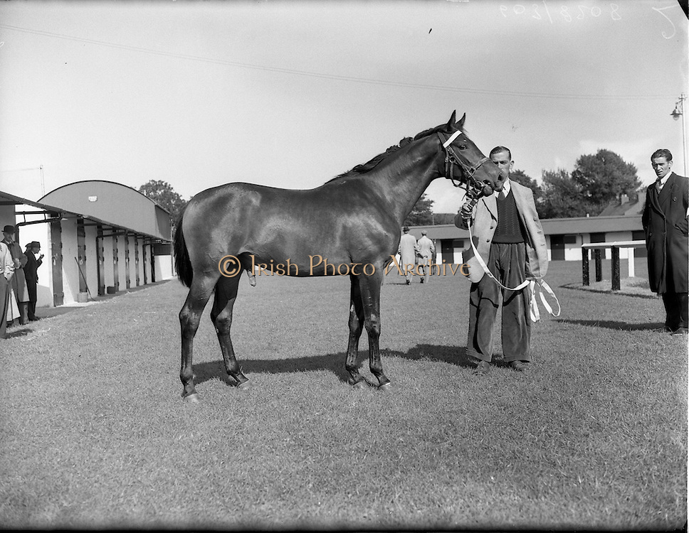 20/09/1954<br /> 09/20/1954<br /> 20 September 1954<br /> Goffs September (Annual Yearling) Bloodstock sales at the RDS, Ballsbridge Dublin. Image shows one of the horse for sale.