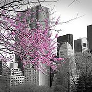 Color splash of Central Park