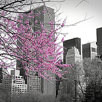 Color splash of Central Park