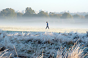 © Licensed to London News Pictures. 02/11/2016. Richmond, UK. A man walks across a misty field.  Deer in the frost in Richmond Park London today 2nd November 2016. much of the country experienced a frost overnight. Photo credit : Stephen Simpson/LNP