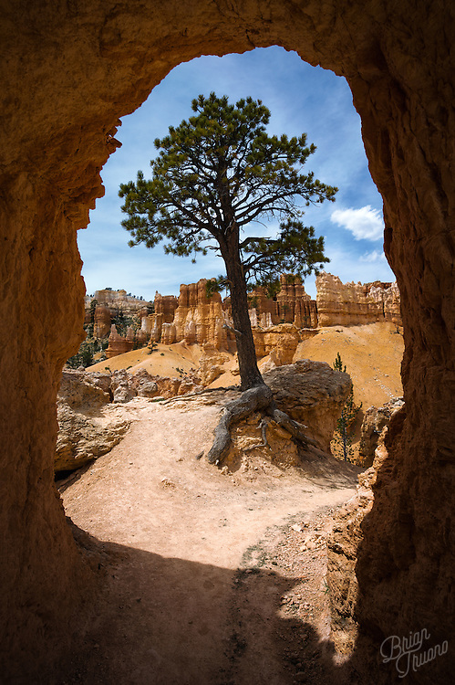 """The framing and lighting of this tree in Bryce Canyon gave me the impression of a """"chat bubble"""".  Perhaps it's a gentle reminder that sometimes we need to put down our phones (and cameras) and just have a chat with Mother Nature. Quietly stroll along and listen to what she has to say. If we do that, we may learn something much more important about our world."""