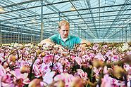Van Geel Orchideeën