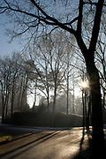 Winter in de Soest,