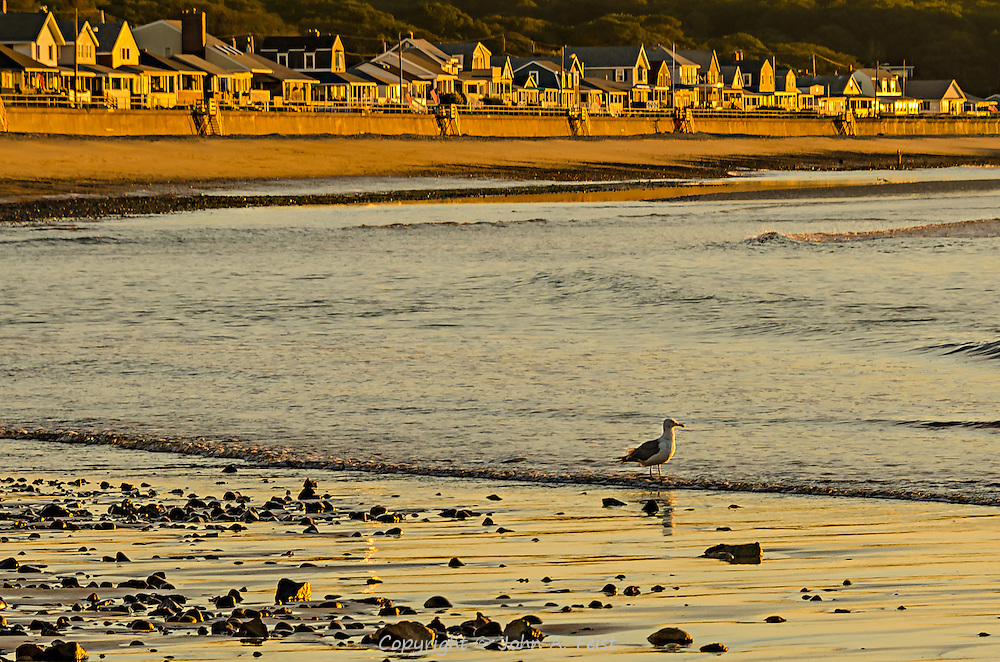 The tide is just starting to come in on Cape Ann in Gloucester, MA.  This gull is taking a few minutes to wade in the surf while taking in a beautiful sunrise.