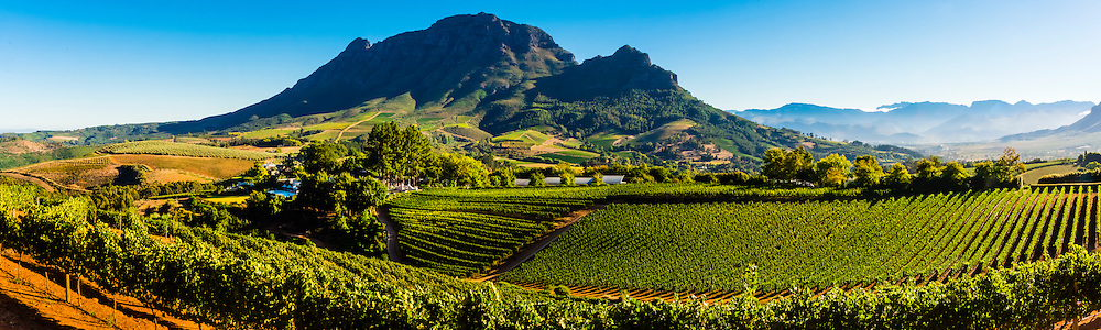 Panoramic view of vineyards, Delaire Graff Wine Estate atop Helshoogte Pass, near Stellenbosch, Cape Winelands (near Cape Town), South Africa.