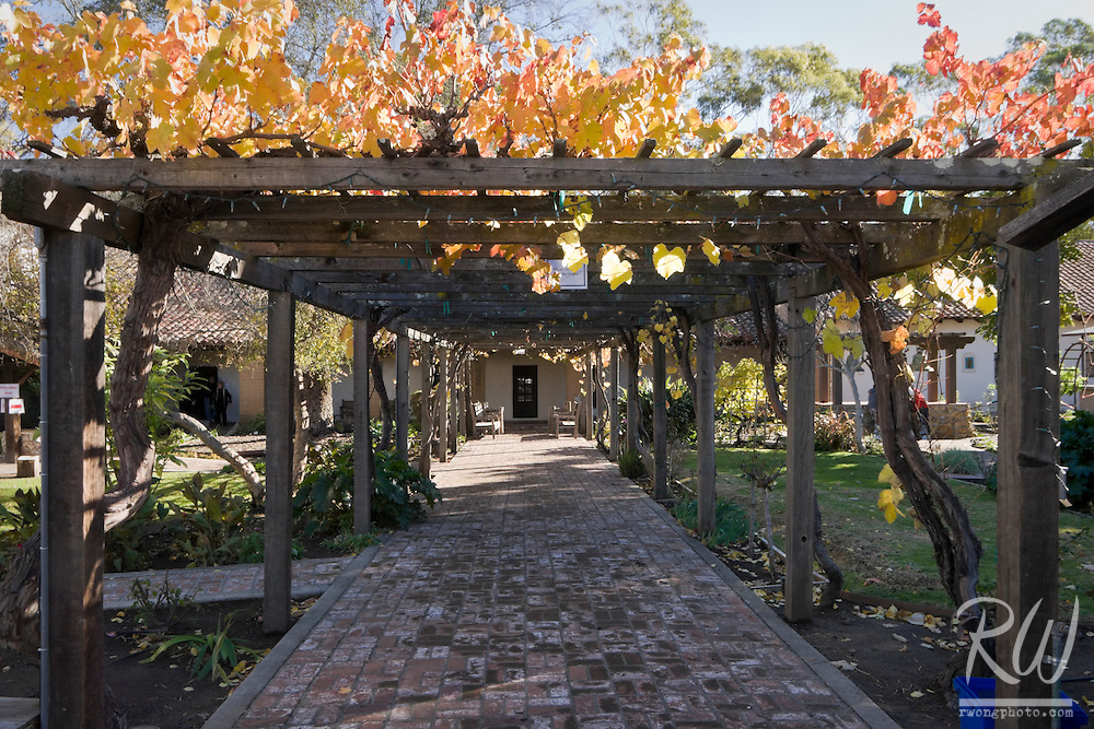 Grapevines and Yellow Autumn Leaves Draped Along Garden Courtyard, Mission San Luis Obispo de Tolosa, California