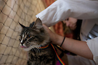 "MCDERMITT, NV - AUG 16:   Ana Apostol a 2nd year student at UC Davis checks out 6 month old ""Kitty"" as owner Jackie Juarez looks on during a clinic sponsored by the Humane Society of the United States August 16, 2009 in McDermitt Nevada.  (Photograph by David Paul Morris)"