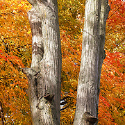 """The Colors Behind"" <br />