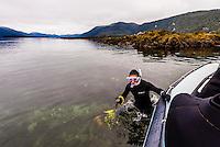 Snorkeling excursion (from Wilderness Explorer small cruise ship), Freshwater Bay, Chichagof Island, Inside Passage, Southeast Alaska USA.