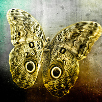 Creative image of a mounted exotic butterfly.