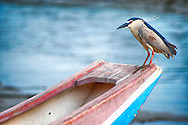 Bird standing at edge of boat