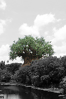 A general view of the Tree of Life at Animal Kingdom at Walt Disney World.