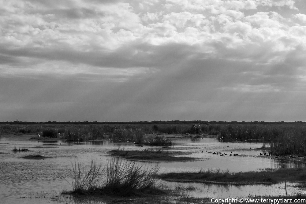 Everglades National Park black and white