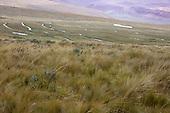 Other Wetlands