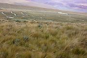 Wetland restoration in paramo; Ecuador, Prov. Pichincha, Antisanilla Reserve