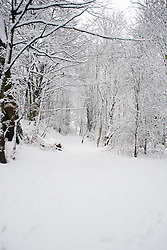 Monday January 21 Ecclesfield Park,  Winter Weather reaches Ecclesfield in Sheffield South Yorkshire with the promise of more to follow .21 January 2013.Image © Paul David Drabble