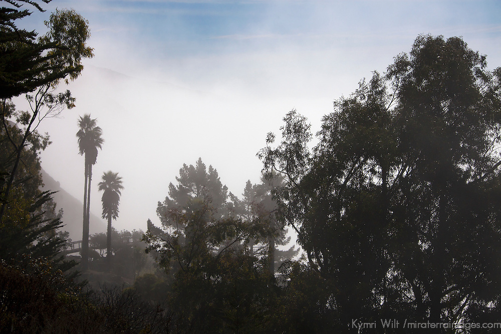 USA, California, San Luis Obispo.  Fog and trees view along Pacific Coast Highway 1.