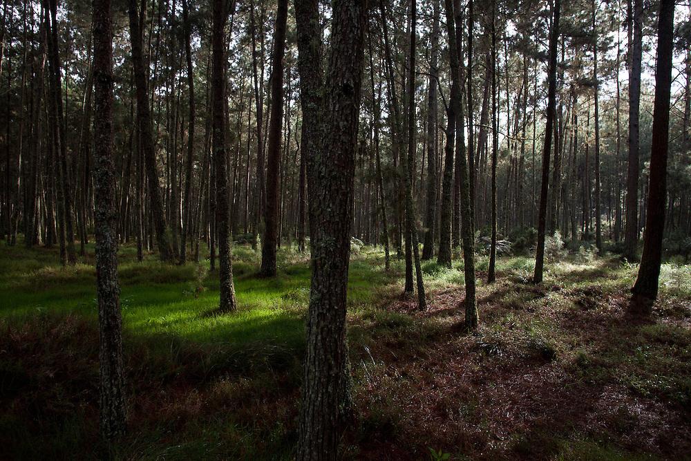 The forest of Parc Nationale La Visite.