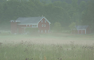 Red barns in a field on a misty summer morning in Hauverville, New York State, U.S.A.