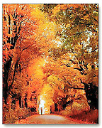 Impact Posters Photo: Fall foliage surrounds a woman with an umbrella as she walks along a country lane in Vermont.