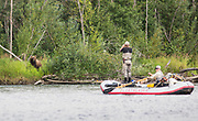 Close encounters of the large and furry kind. Grizzly and raft on the Kisaralik River, Alaska