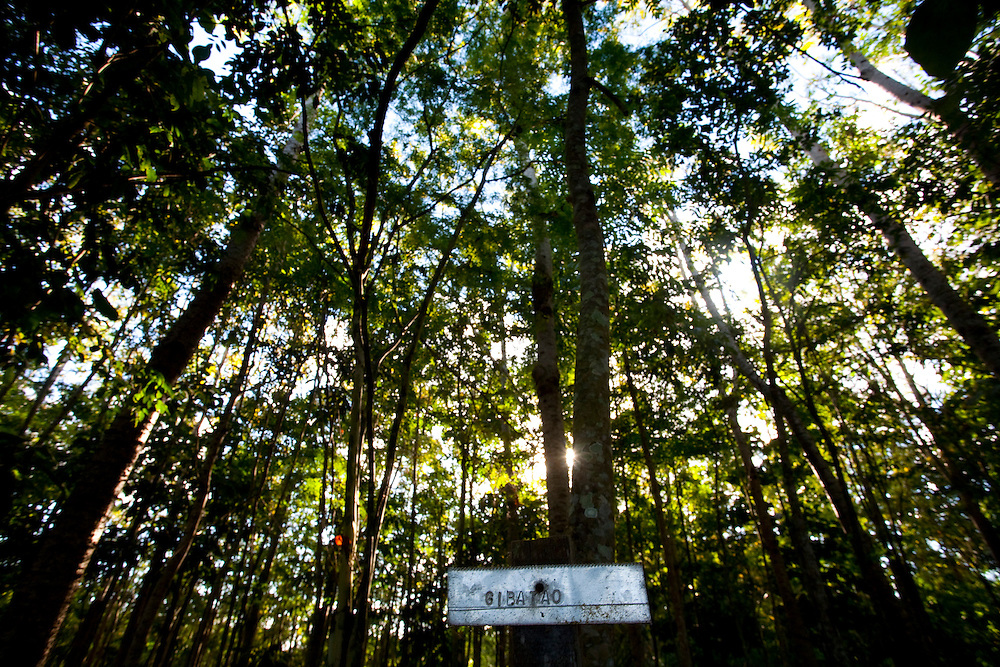 Linhares_ES, Brasil...Floresta recuperada em area particular com apoio do Instituto Ambiental da Vale do Rio Doce...Forest  recovered  in particular area with support from the Environmental Institute of Vale do Rio Doce...Foto: LEO DRUMOND /  NITRO