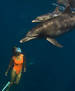 Mikura Dolphins
