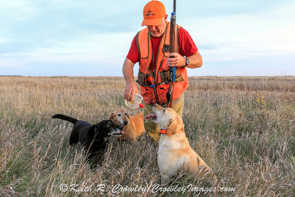 ter is critical to a hunting dog's health during warm weather