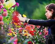 Beautiful Butchart Gardens in Victoria, BC being captured by a beautiful, young woman