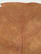 close up of a dried leaf