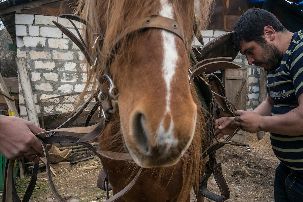 VANK, NAGORNO-KARABAKH - APRIL 17: Men put a saddle on a Karabakh horse on April 18, 2015 in Vank, Nagorno-Karabakh. Since signing a ceasefire in a war with Azerbaijan in 1994, Nagorno-Karabakh, officially part of Azerbaijan, has functioned as a self-declared independent republic and de facto part of Armenia, with hostilities along the line of contact between Nagorno-Karabakh and Azerbaijan occasionally flaring up and causing casualties. (Photo by Brendan Hoffman/Getty Images) *** Local Caption ***