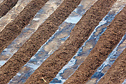 Rows of municipal compost in Lowell, MA.