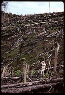Tom Lovejoy uses binocs in clearcut;World Wildlife studies Amazon remnants to gauge damage; Manaus Brazil