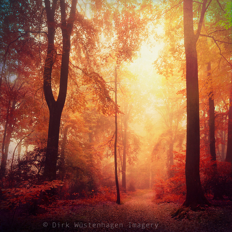 Autumnly misty forest in red tones.