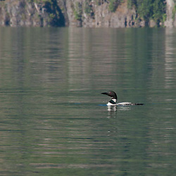 Common Loon (Gavia immer) on Ross Lake, Ross Lake National Recreation Area, North Cascades National Park, Washington, US