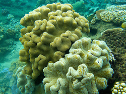 Coral formations, The Great Barrier Reef, Queensland, Australia