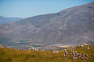 VILLIERSDORP, SOUTH AFRICA - Scenic view during stage three , 3 , of the Absa Cape Epic Mountain Bike Stage Race held between Villiersdorp and Greyton on the 24 March 2009 in the Western Cape, South Africa..Photo by Karin Schermbrucker /SPORTZPICS