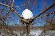 Snow on a nest in Saukville, Wis. Jeffrey Phelps photo
