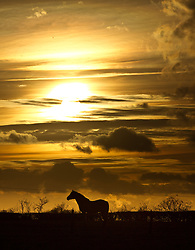 © Licensed to London News Pictures. 08/02/2013. Nottingham, UK. Sunset over the fields of Nottinghamshire where horses graze as snow id forecast for the area. Photo credit : Tom Maddick/LNP