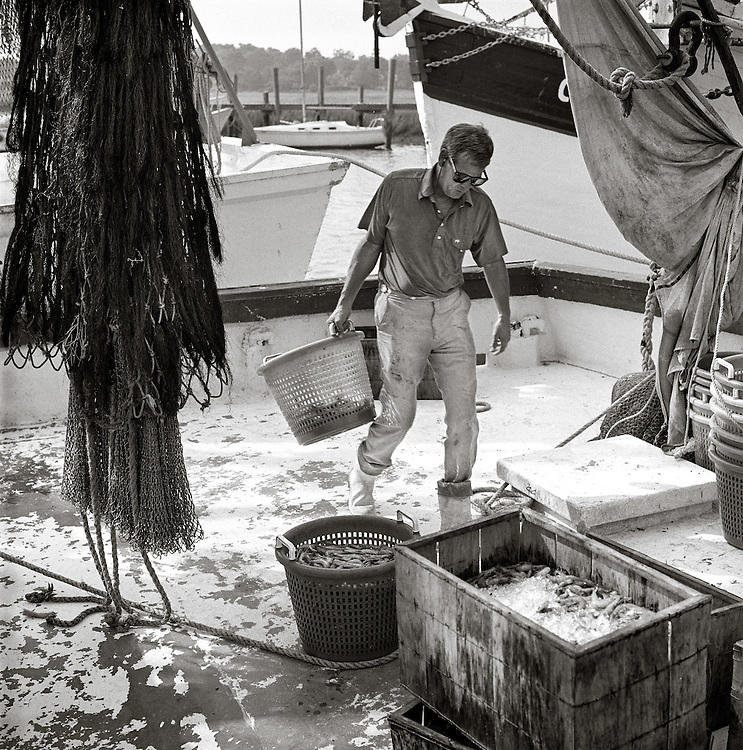 The crew of the Lady Caroline unload the days catch at the docks at Wando Seafood on Shem Creek in Mount Pleasant, South Carolina.